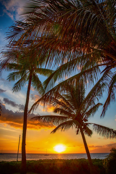 Maui Sunset Beautiful sunset beyond the palm trees on the tropical Hawaiian island of Maui. south pacific ocean stock pictures, royalty-free photos & images