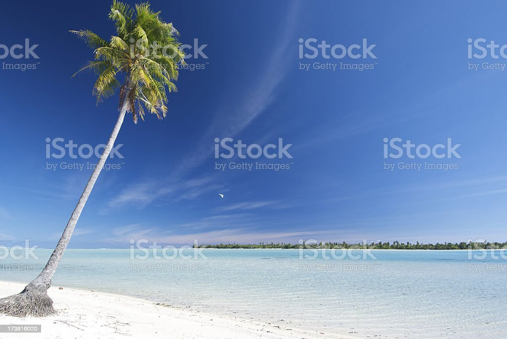 Maupiti Palm royalty-free stock photo