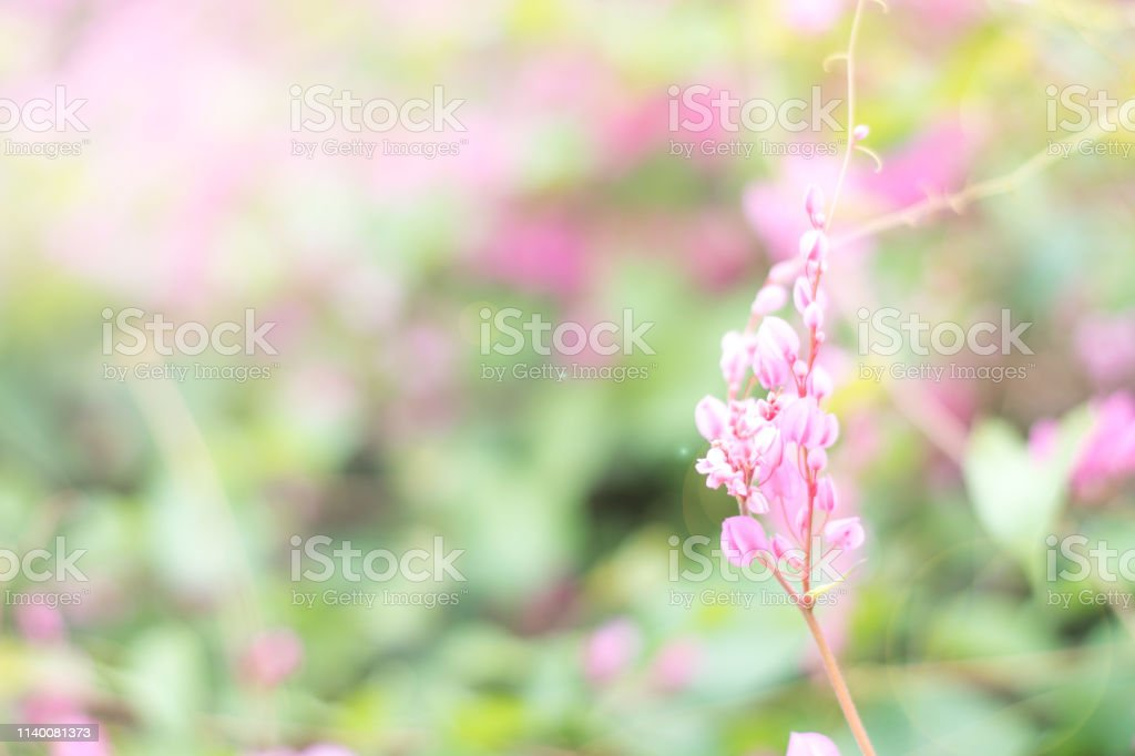 May Flowers Field Of Wild Flower In Garden In Sunny Day For