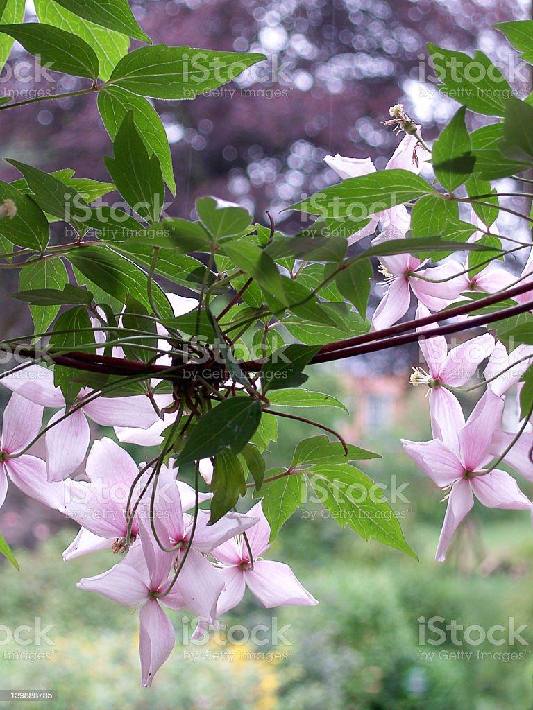 May garden royalty-free stock photo