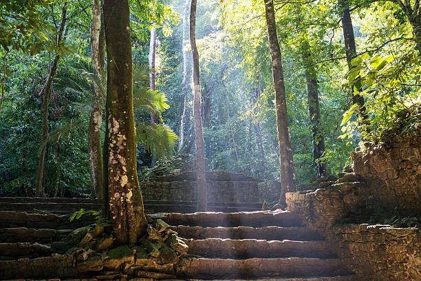 マヤ遺跡やジャングルでパレンケ、メキシコ - 遺跡 ストックフォトと画像
