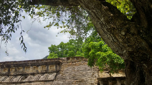 Mayan ruins seen from next to a tree Mayan ruins in the distance with a part of a tree on the right of the shot as if seen standing next to it naya rivera stock pictures, royalty-free photos & images