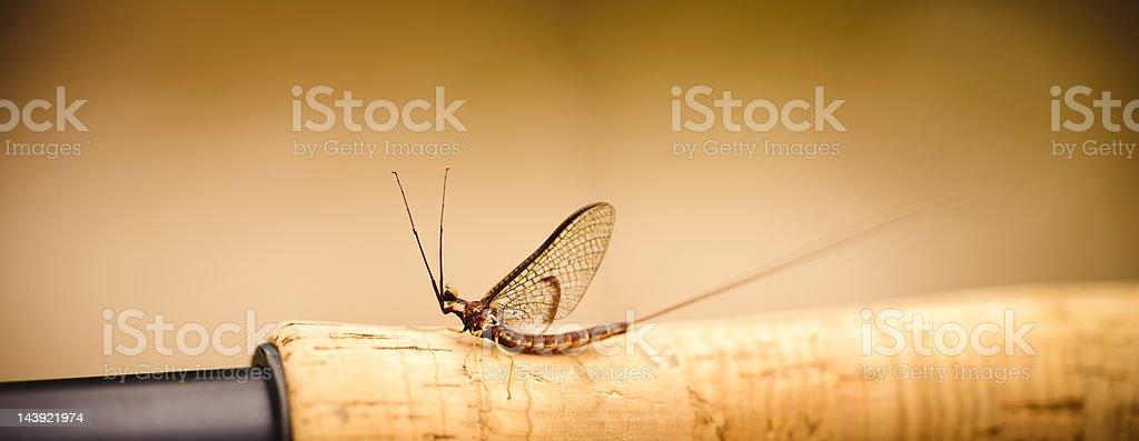 Mayfly on Fising Rod Handle stock photo