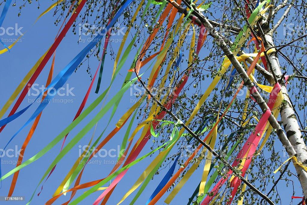 Maypole ribbons around the tree royalty-free stock photo