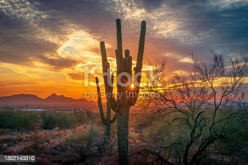 Sunset silhouette of saguaro cactus in the McDowell Mountains overlooking Scottsdale, AZ