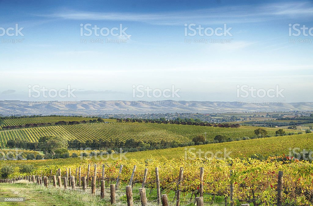 McLaren Vale vineyard and horizon in the afternoon stock photo