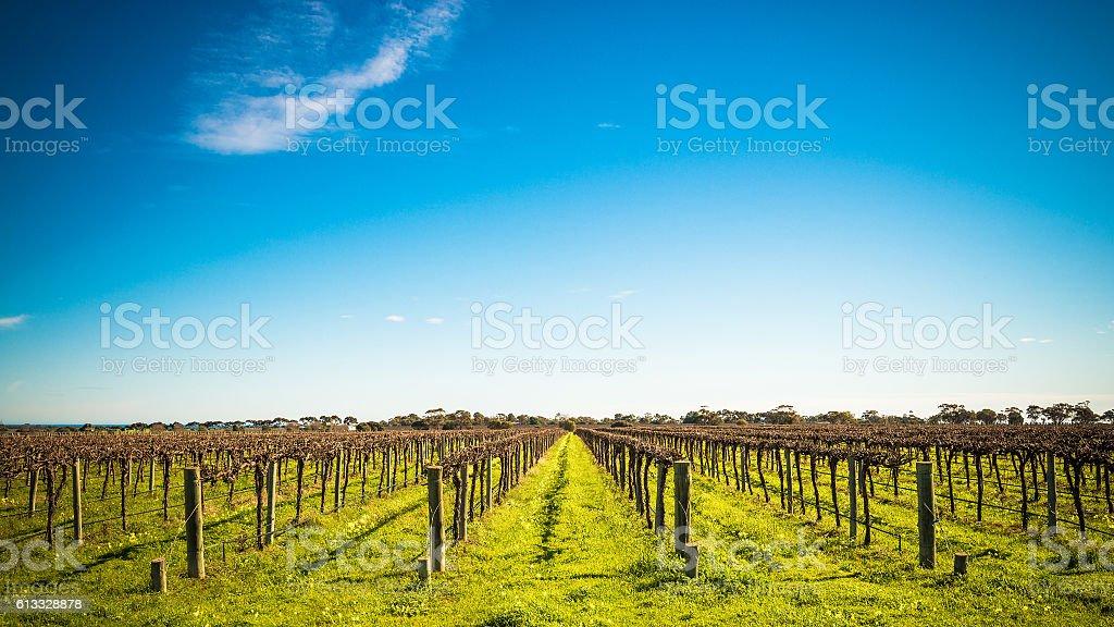 McLaren Vale wineries stock photo