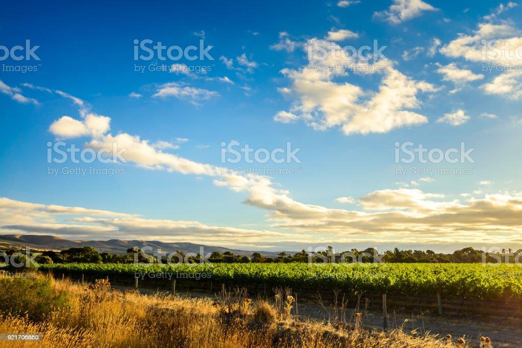 McLaren valley vineyards at sunset royalty-free stock photo