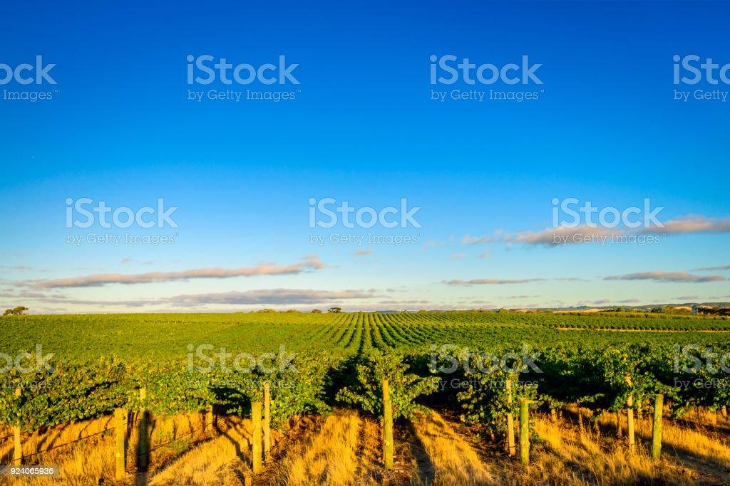 McLaren valley vineyards at sunset stock photo