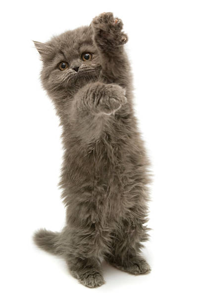 me please - kitten stock photos and pictures