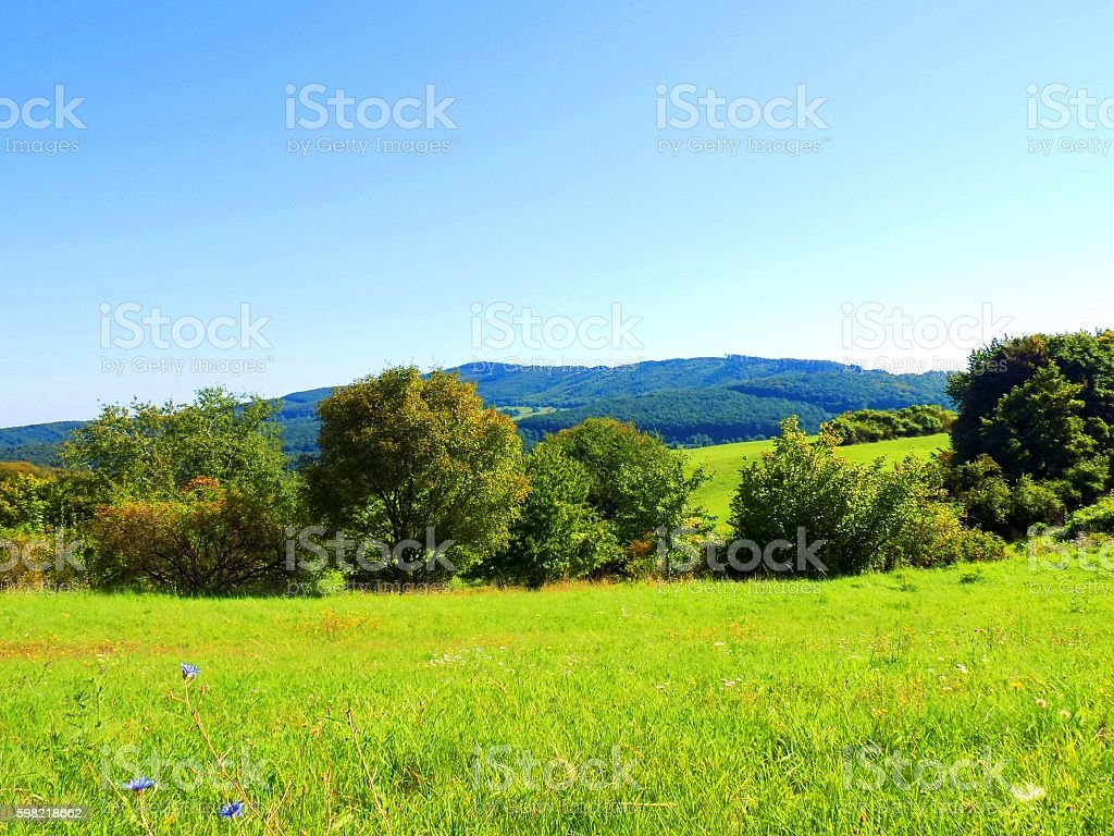 Meadow and deciduous forest in wild nature foto royalty-free