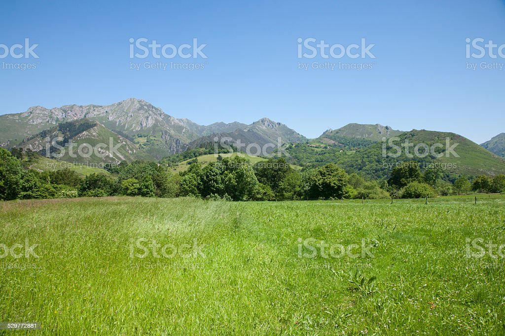 meadow and green mountains stock photo