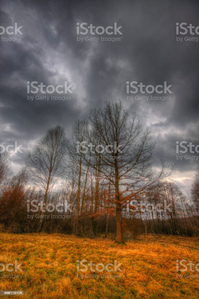 Meadow and small forest under dramatic sky at early spring stock photo