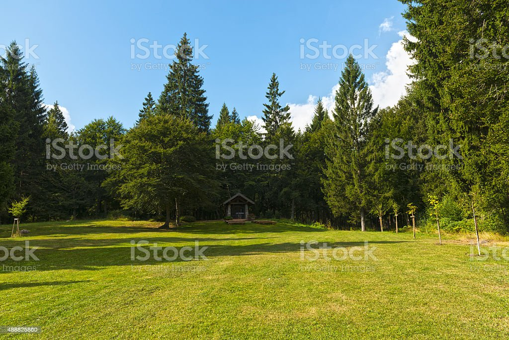 Meadow and trees in the mountains stock photo