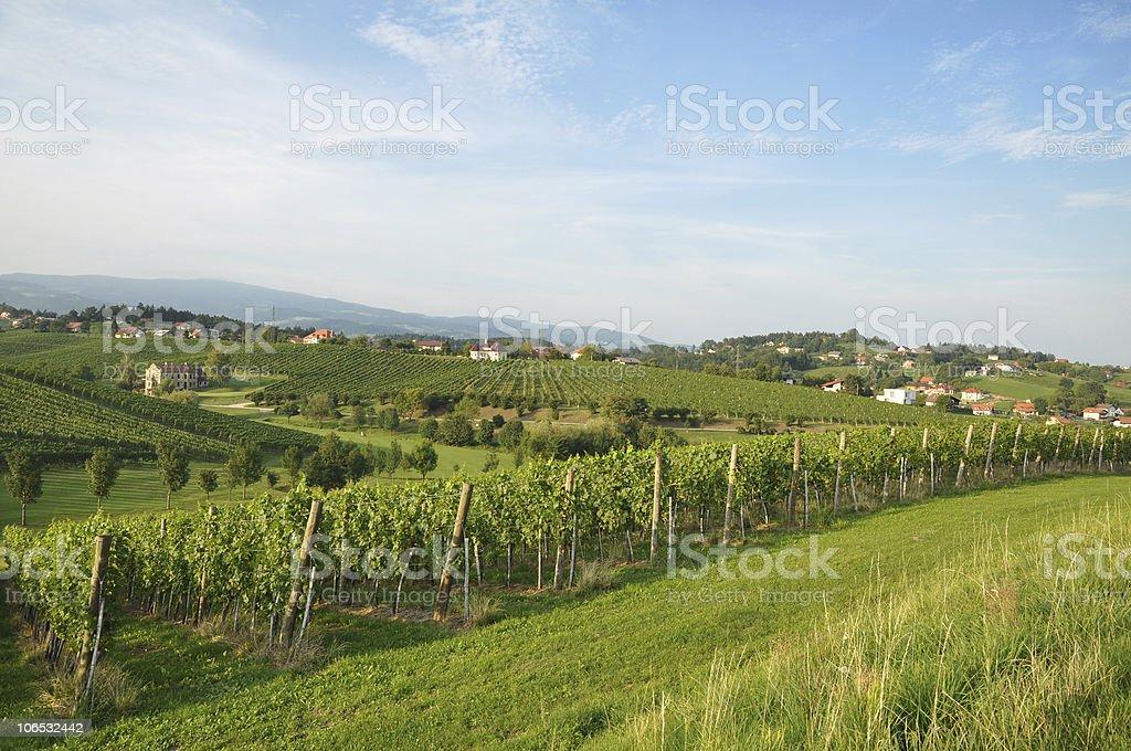 Meadow and Vineyards. Škalce, Slovenia royalty-free stock photo