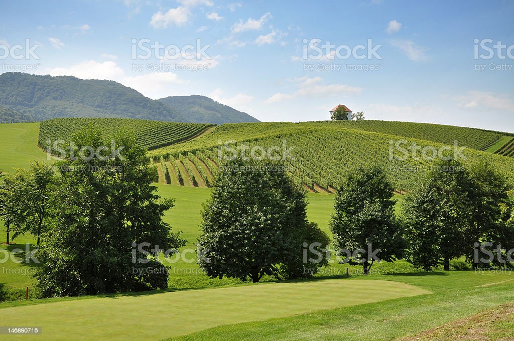 Meadow and Vineyards royalty-free stock photo
