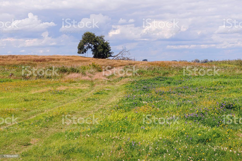 Meadow at Havel River (Germany) with old lime tree stock photo