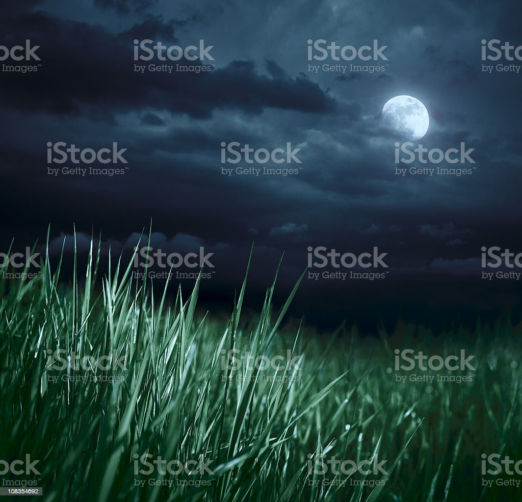 Meadow at night stock photo