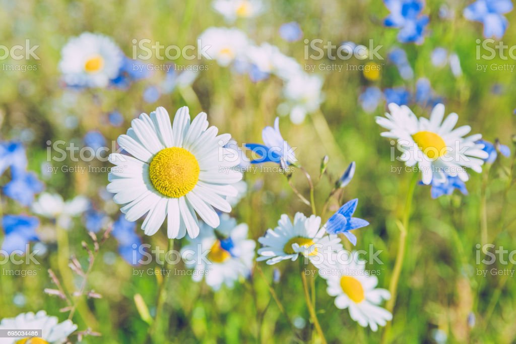 Meadow at summer in Latvia. 2015 stock photo