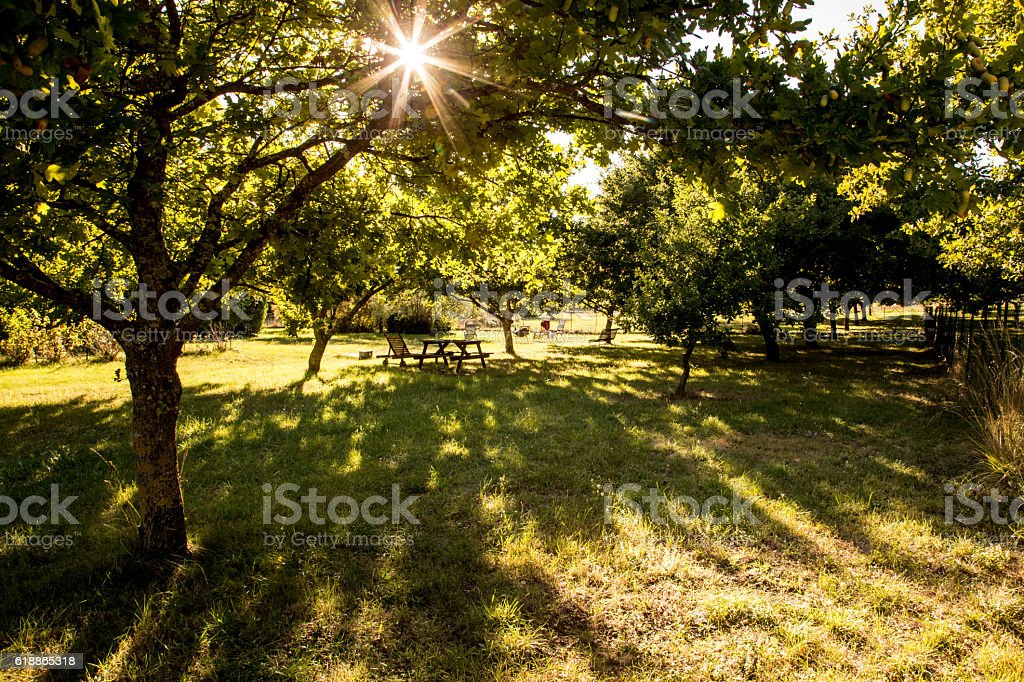 Meadow at sundown stock photo