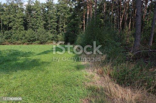 summer grass after sort rain.
