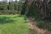 eine Wiese grenzt an einen Waldrand