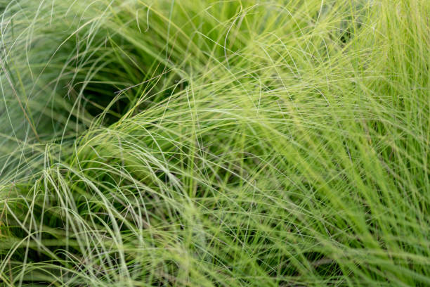 Meadow Hintergrund – Foto