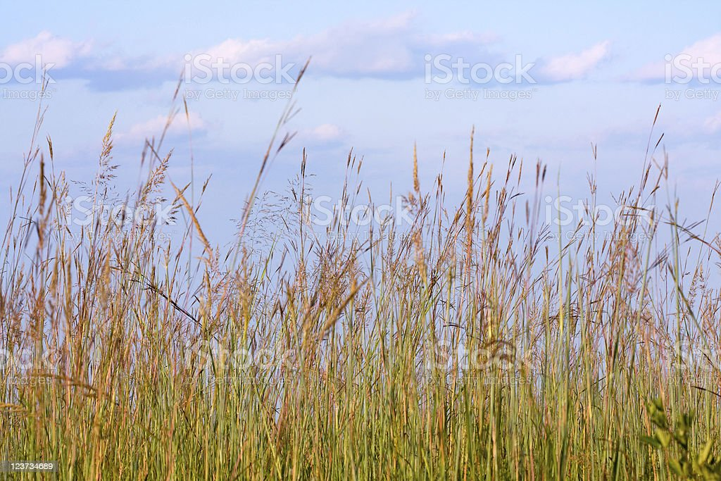Meadow Background royalty-free stock photo