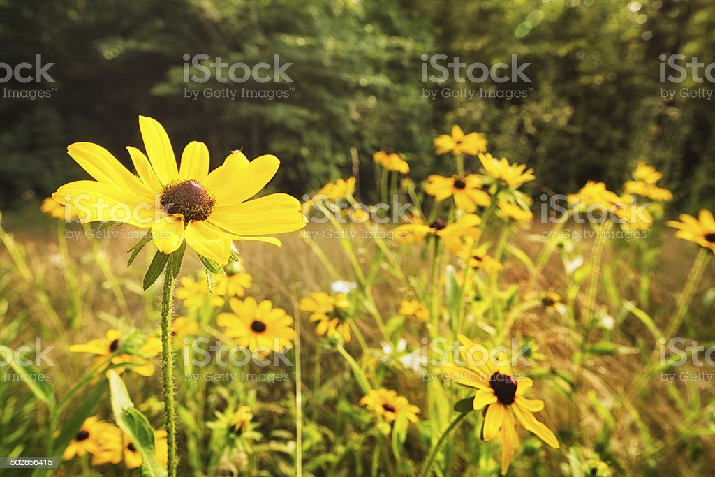 Meadow filled with wildflowers royalty-free stock photo