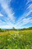 Meadow flowers and Cirrus cloud in the sky