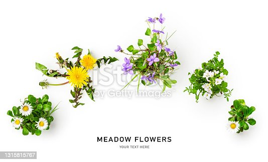 Meadow flower creative collection. Daisy, cardamine, dandelion and viola flowers with leaves on white background. Floral arrangement, design element. Springtime and summer concept. Top view, flat lay