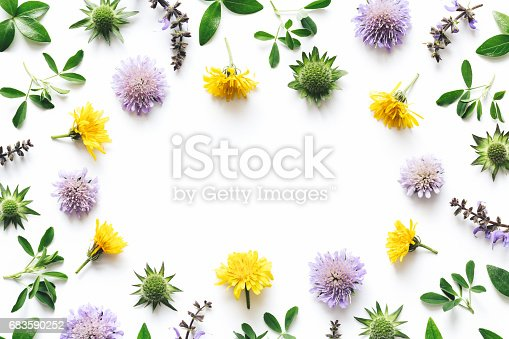 Purple and yellow meadow flowers frame on white background.