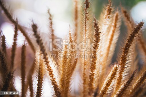 1135260918 istock photo meadow flowers in early sunny fresh morning. Vintage autumn landscape 666912464