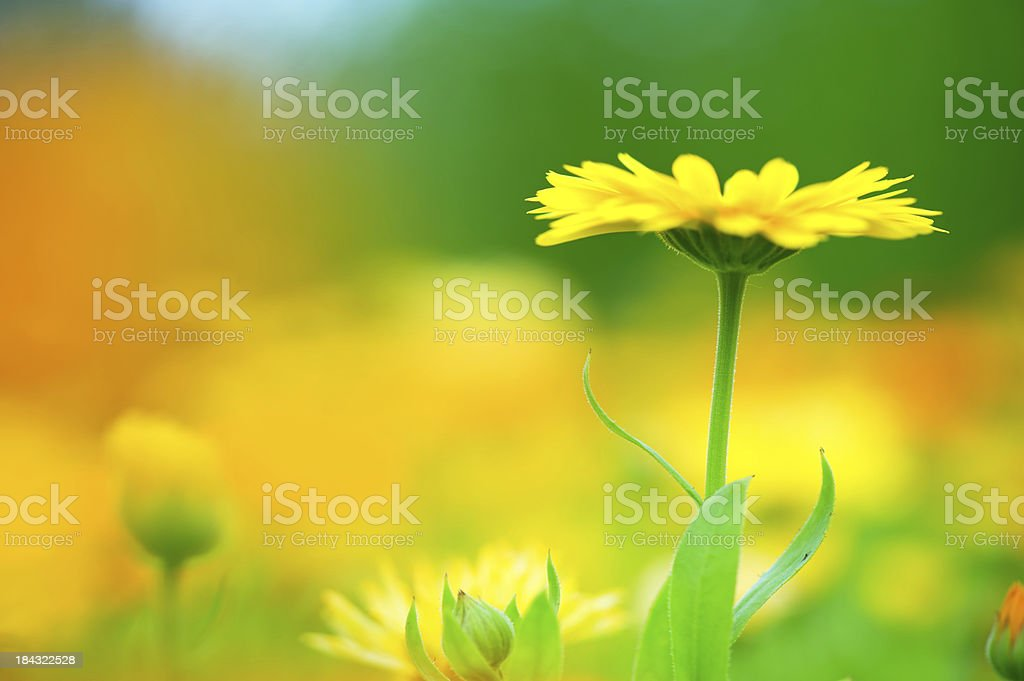Meadow flowers stock photo