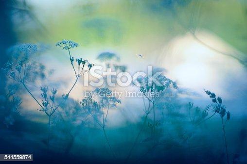 istock Meadow flowers 544559874