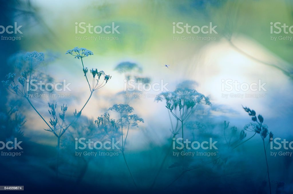 Meadow の花 ストックフォト