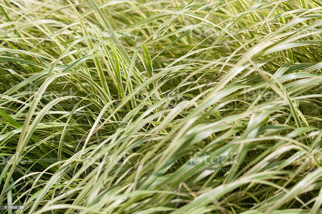 Meadow full of green tall grass stock photo