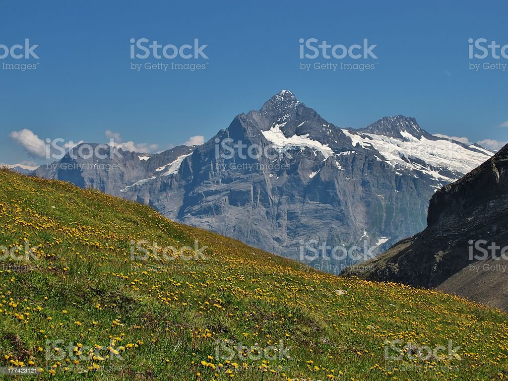 Meadow Full Of Wildflowers royalty-free stock photo