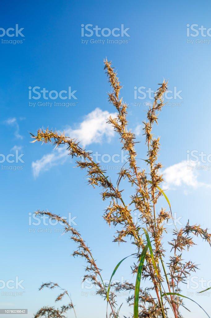 Meadow grass stock photo