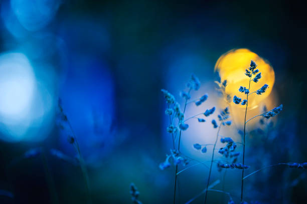 Meadow grasses in summer night stock photo