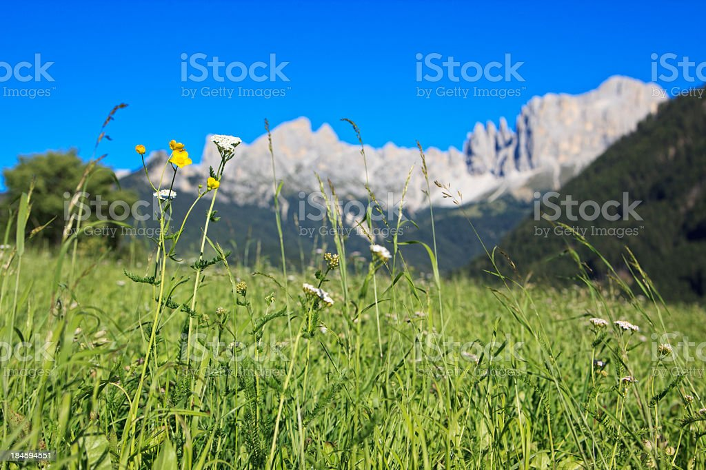 Meadow in front of Catinaccio/Rosengarten group, Dolomite Alps stock photo