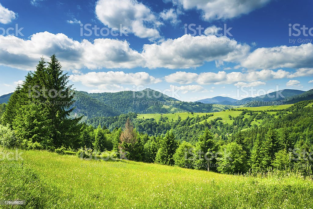 meadow in mountains royalty-free stock photo