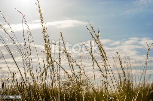519188550istockphoto A meadow in nature with evening sun in the sky 1027561360