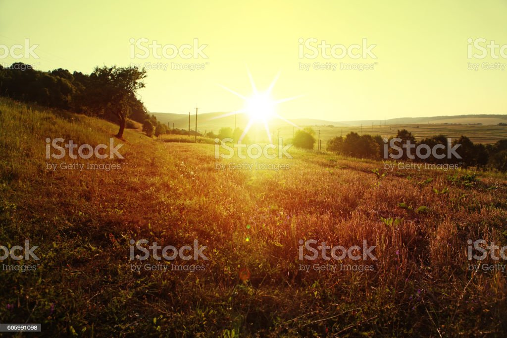 meadow in rural areas stock photo
