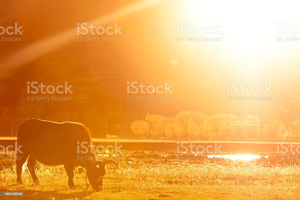 meadow in sun royalty-free stock photo