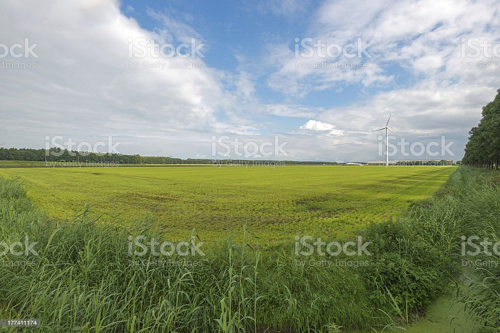 Meadow in sunlight royalty-free stock photo