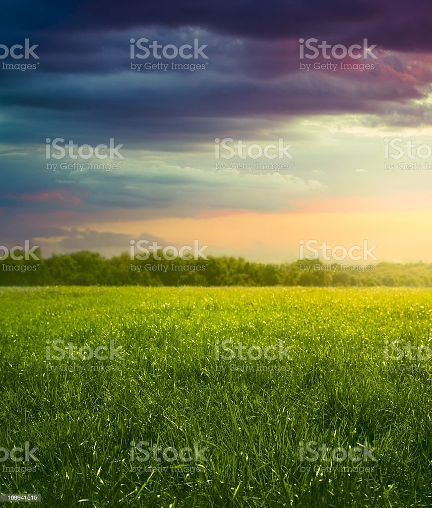 Meadow in the evening stock photo