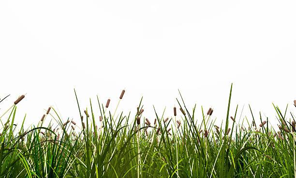 Meadow isolated on white background picture id525233950?b=1&k=6&m=525233950&s=612x612&w=0&h=adsndyfdlcmko9ud9nhtswqwpdjozyga9h5aehtfuec=