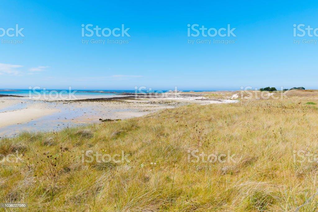 Meadow meets beach stock photo