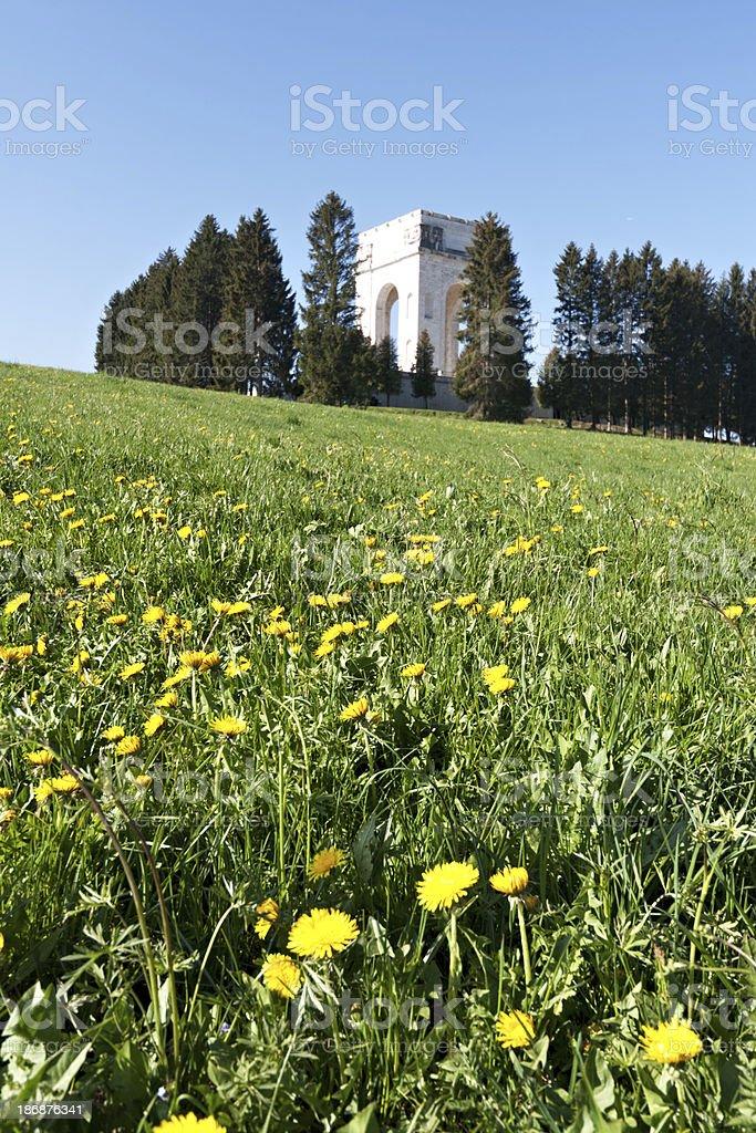 Prato di fioritura fiori di tarassaco - foto stock